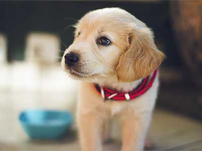 Cachorros en Cuarentena