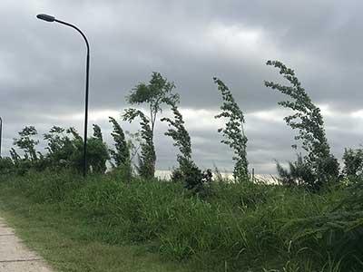 Falta de mantenimiento en los espacios verdes de Nordelta
